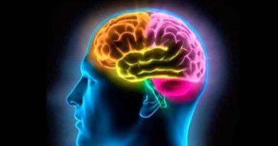Cambios cerebro
